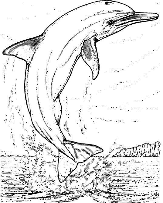 Dessins et coloriages de dauphins site pour enfants - Coloriage divers a imprimer ...