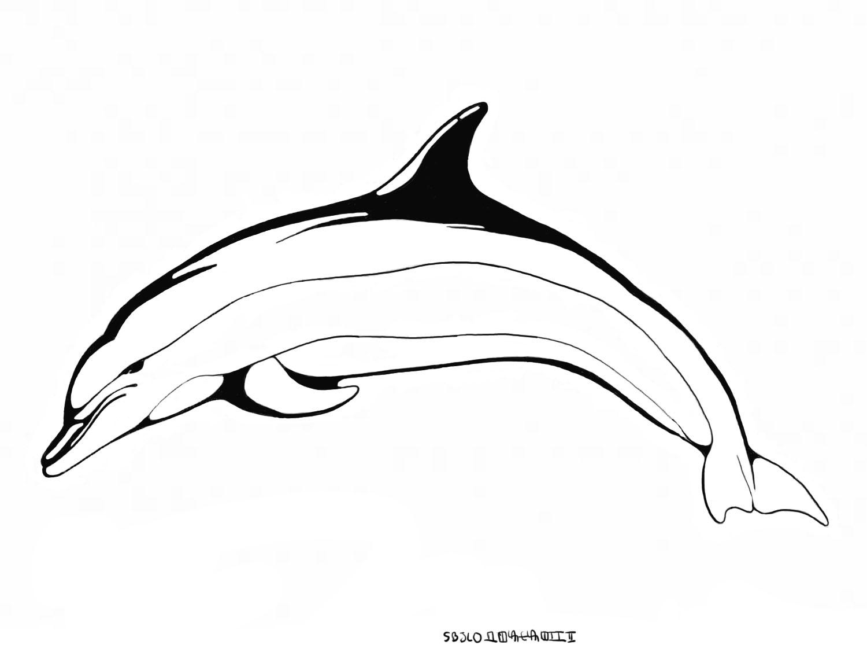 Dessins et Coloriages de dauphins - Site Pour Enfants
